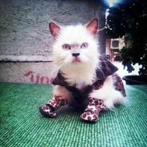 รีวิว รองเท้าสุนัข รองเท้าหมา รองเท้าแมว ลายเสือV2