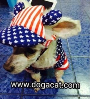 น้องทาโร่ใส่เสื้อสุนัข เสื้อหมา เสื้อน้องหมา เสื้อผ้าหมา เสื้อแมว เสื้อผ้าสุนัข ชุดเอี๊ยมยืด Polka Dot ลายสหรัฐ