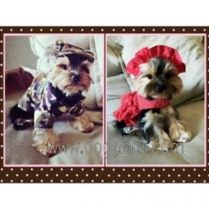 review combo set เสื้อสุนัข เชิ๊ตทหารสีน้ำตาล หมวกสุนัขมีหู