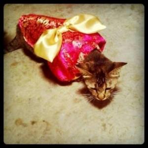 แมว เสื้อสุนัข ชุดกิโมโนญี่ปุ่น สีแดง