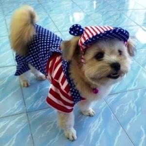 น้องชิฟูกับ combo set เสื้อสุนัข ชุดเอี๊ยมยืด Polka Dot ลายสหรัฐ