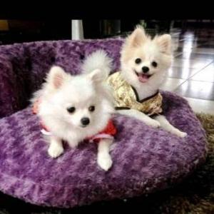 รีวิวคู่2 เสื้อสุนัข ชุดจีน สีแดง