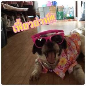 น้อง Goody เสื้อสุนัข เสื้อน้องหมา เสื้อหมา เสื้อผ้าสุนัข เสื้อผ้าหมา เสื้อแมว ลายดอก57 สีม่วง