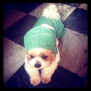 น้อง happy เสื้อสุนัข ชุดเอี๊ยมยืด Polka Dot ลายจุดเขียว