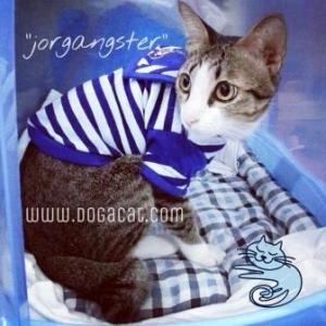 jorgangster เสื้อสุนัข ชุดทหารเรือ สีน้ำเงิน