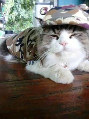 review น้องยูโลในชุด combo set เสื้อสุนัข เชิ๊ตทหารสีน้ำตาล หมวกสุนัขมีหู