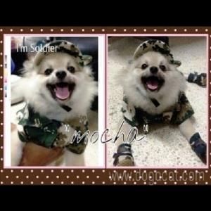 combo set เสื้อสุนัข เสื้อหมา เสื้อแมว เชิ๊ตทหารสีเขียว หมวกสุนัขมีหู รองเท้าสุนัข