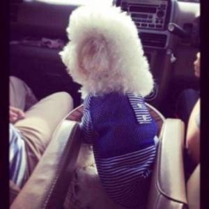 review เสื้อสุนัข ตาข่ายV2 สีน้ำเงิน