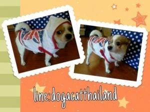 review เสื้อสุนัข เสื้อยืด ลาย london สีขาว