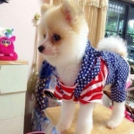 น้องขุมทรัพย์ในชุดเสื้อสุนัข ชุดเอี๊ยมยืด Polka Dot ลายสหรัฐ