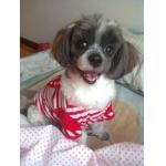 น้องจีจี้ใส่เสื้อสุนัข เสื้อหมา เสื้อน้องหมา เสื้อผ้าหมา เสื้อแมว เสื้อผ้าสุนัข ชุดทหารเรือ สีแดง