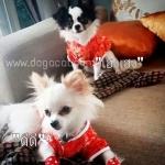 น้องดีดีกับน้องเฮงเฮง เสื้อสุนัข เสื้อหมา เสื้อน้องหมา เสื้อผ้าหมา เสื้อแมว เสื้อผ้าสุนัข ชุดจีน สีแดง