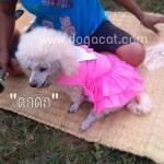 น้องดุ๊กดิ๊กกับเสื้อสุนัข เสื้อหมา เสื้อน้องหมา เสื้อผ้าหมา เสื้อแมว เสื้อผ้าสุนัข เดรสสายคล้อง กระโปรงลายจุด สีชมพู