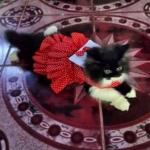 น้องถ้วยฟูในชุดเสื้อสุนัข เดรสสายคล้อง กระโปรงลายจุด สีแดง