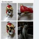 น้องทองพูลกับเสื้อสุนัข เสื้อหมา เสื้อผ้าหมา เสื้อแมว เสื้อผ้าสุนัข ชุดกิโมโนญี่ปุ่น สีแดง