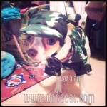 น้องปอเช่กับcombo set เสื้อสุนัข เสื้อหมา เสื้อน้องหมา เสื้อผ้าหมา เสื้อแมว เสื้อผ้าสุนัข เชิ๊ตทหาร สีเขียว