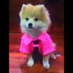 น้องมีตังค์ เสื้อสุนัข ชุดโปโล มีไทด์ มีอินธนู สีชมพู