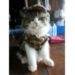 น้องยูโลในชุด combo set เสื้อสุนัข เชิ๊ตทหารสีน้ำตาล หมวกสุนัขมีหู