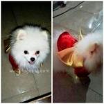 น้องรถถัง เสื้อสุนัข ชุดกิโมโนญี่ปุ่น สีแดง