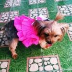 น้องหนูดีในชุดเสื้อสุนัข เดรสสายคล้อง กระโปรงลายจุด สีชมพู