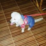 น้องเต้าหู้กับเสื้อสุนัข เสื้อหมา เสื้อน้องหมา เสื้อผ้าหมา เสื้อแมว เสื้อผ้าสุนัข ชุดเอี๊ยมยืด Polka Dot ลายสหรัฐ