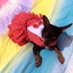 น้องแตงไทย เสื้อสุนัข เดรสสายคล้อง กระโปรงลายจุด สีแดง