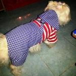 น้องแมมมี่ เสื้อสุนัข ชุดเอี๊ยมยืด Polka Dot ลายสหรัฐ