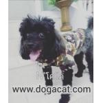 น้องโคโค่ใส่เสื้อสุนัข เสื้อหมา เสื้อน้องหมา เสื้อผ้าหมา เสื้อแมว เสื้อผ้าสุนัข เชิ๊ตทหาร สีน้ำตาล