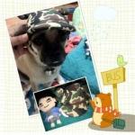 น้องไฮโซใส่หมวกสุนัขมีหู หมวกหมามีหู หมวกน้องหมามีหู หมวกแมวมีหู ลายทหาร สีเขียว