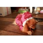บราวนี่กับเสื้อสุนัข เสื้อหมา เสื้อน้องหมา เสื้อผ้าหมา เสื้อแมว เสื้อผ้าสุนัข กันฝน สีแดง