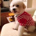 รีวิวเสื้อสุนัข ชุดทหารเรือ สีแดง