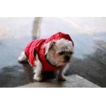 รีวิวเสื้อสุนัข เสื้อหมา เสื้อผ้าหมา เสื้อแมว เสื้อผ้าสุนัข เสื้อยืด ลายspider