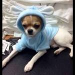 มิคกี้ ในชุดเสื้อสุนัข ชุดกระต่าย สีฟ้า