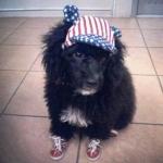 น้องมารวย หมวกสุนัขมีหู ลายธงชาติสหรัฐ