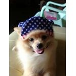 รีวิว หมวกสุนัขมีหู หมวกหมามีหู หมวกแมวมีหู ลายธงชาติสหรัฐ