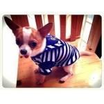 น้องลักกี้ เสื้อสุนัข ชุดทหารเรือ สีน้ำเงิน