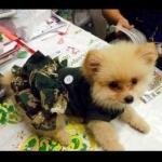 น้องโซดา เสื้อสุนัข ชุดเดรสทหาร