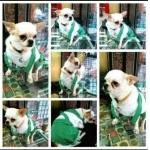 น้องพอใจ เสื้อสุนัข ชุดเอี๊ยมยืด Polka Dot ลายจุดเขียว