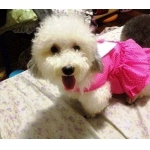 นู๋พิงค์ เสื้อสุนัข เดรสสายคล้อง กระโปรงลายจุด สีชมพู