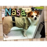 น้องนาซ่า ในชุดเสื้อสุนัข ชุดข้าราชการ