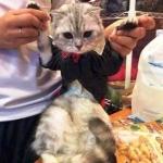 reviews น้องแมวเสื้อสุนัข ชุดทักซิโด้ชาย สูทดำ