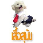 เสื้อสุนัข เสื้อหมา เสื้อผ้าสุนัข เสื้อผ้าหมา