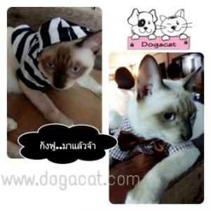 น้องกังฟูใส่เสื้อสุนัข เสื้อหมา เสื้อน้องหมา เสื้อผ้าหมา เสื้อแมว เสื้อผ้าสุนัข ลายขวาง ขาวดำ