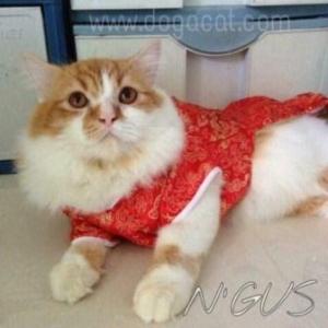 น้องกัสกับเสื้อสุนัข เสื้อหมา เสื้อน้องหมา เสื้อผ้าหมา เสื้อแมว เสื้อผ้าสุนัข ชุดจีน สีแดง