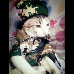 น้องงูเหลือม combo set เสื้อสุนัข เชิ๊ตทหารสีเขียว หมวกสุนัขมีหู