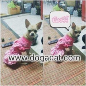 น้องจีจี้ใส่เสื้อสุนัข เสื้อหมา เสื้อผ้าหมา เสื้อน้องหมา เสื้อแมว เสื้อผ้าสุนัข เดรสเอี๊ยมยืด ลายตุ๊กตา สีชมพู