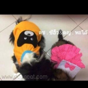 น้องซีอิ๊วใส่เสื้อสุนัข เสื้อหมา เสื้อน้องหมา เสื้อผ้าหมา เสื้อแมว เสื้อผ้าสุนัข ตาข่ายหมี สีเหลือง