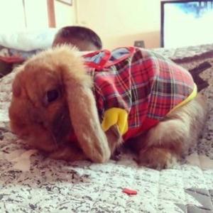 น้องดอลลี่ เสื้อสุนัข เสื้อยืดสก๊อต มีเป้ สีแดง