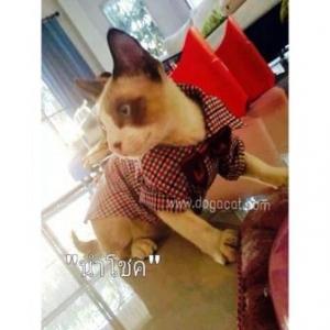 น้องนำโชคกับเสื้อสุนัข เสื้อหมา เสื้อน้องหมา เสื้อผ้าหมา เสื้อแมว เสื้อผ้าสุนัข สก๊อตเล็ก อินธนู โทนน้ำตาล