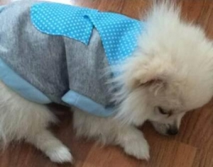 น้องน้ำเค็มกับเสื้อสุนัข เสื้อหมา เสื้อน้องหมา เสื้อผ้าหมา เสื้อแมว เสื้อผ้าสุนัข เสื้อยืด ผ้าพันคอลายจุด สีฟ้า